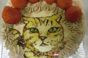 ネコケーキ